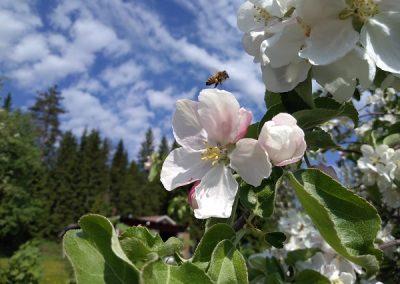 Mehilainen lentaa